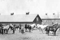 1915-06-03-Farm-Scene-Post-card-ArnoldDM1883-to-ArnoldDS1890