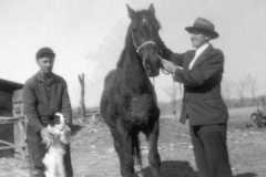 1940-00-00-ArnoldDS1890-MountainRon-Horse