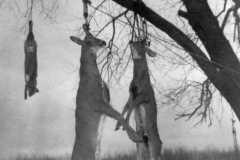 1940-00-00-Honor-Deer-Harvest-Two-Deer-and-Fox