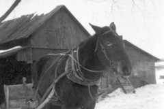 1941-02-01-Arnold-Farm-Horse