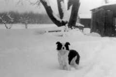1945-00-00-Arnold-Homestead-Dog-Chum-and-Barn