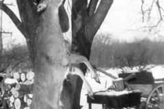 1947-00-00-Big-buck