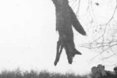 1947-00-00-fox-01