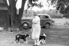 1954-00-00-BalitzTM1896-dogs-01