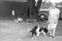 1954-00-00-BalitzTM1896-dogs-02