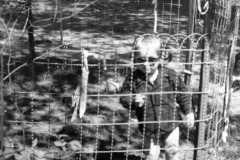 1955-05-01-ArnoldJY1953-cage-01