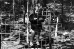 1955-05-01-ArnoldJY1953-cage-03