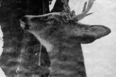 Deer Season, 1956.