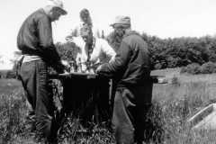 1959-00-00-ArnoldLD1929-ArnoldAF1921-ArnoldDS1890-cleaning-fish