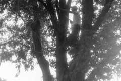 1959-00-00-ArnoldLD1929-tree
