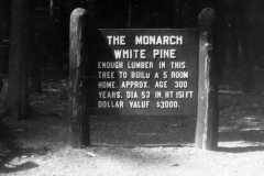 1967-09-04-Hartwick-Pines-3