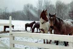 1968-00-00-South-Haven-Horses-