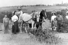 Harvest Scene, circa 1910