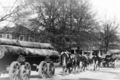 Logging Scene, circa 1919