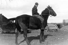 Laban D. Arnold with Farm Horse, circa 1943